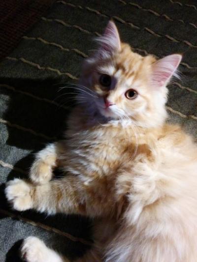 20140730 FB Katzen19