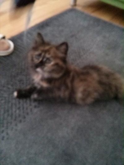 20140730 FB Katzen2
