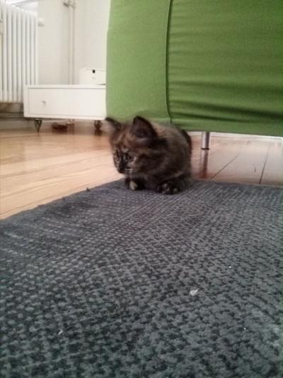 20140730 FB Katzen3