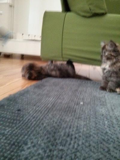 20140730 FB Katzen5