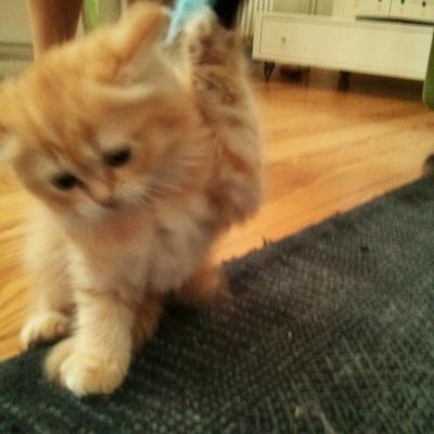 20140730 FB Katzen6