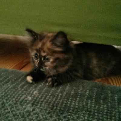 20140730 FB Katzen9