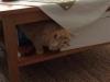 20140730 FB Katzen18