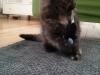 20140730 FB Katzen4
