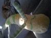 2011-03-02-10-07-05-423-orig